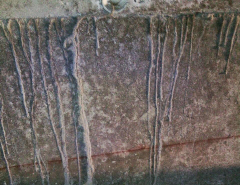 Expertos en eliminar plagas de termitas expertos en for Carcoma o termitas